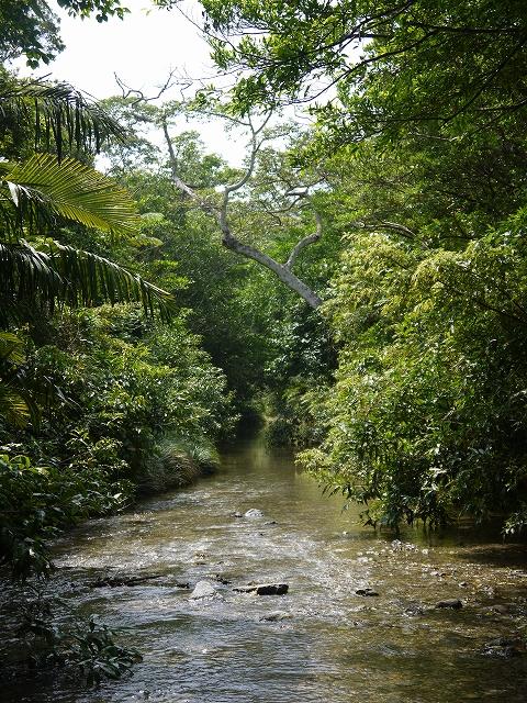 川遊びと生き物観察ツアー