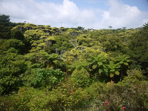 新緑真っ盛り!潤初(うりずん)のやんばるの森。