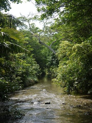 暑い日にオススメ♪「川遊びと生き物観察ツアー」
